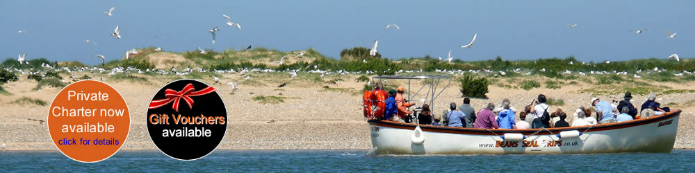 Blakeney Point Seal Trips with Beans Boats