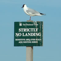 Black headed Gull that can't read!
