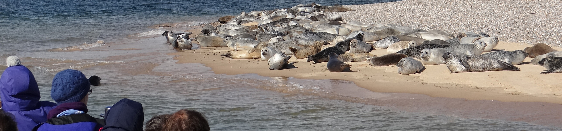 Passengers up close to the Seals at Blakeney Point