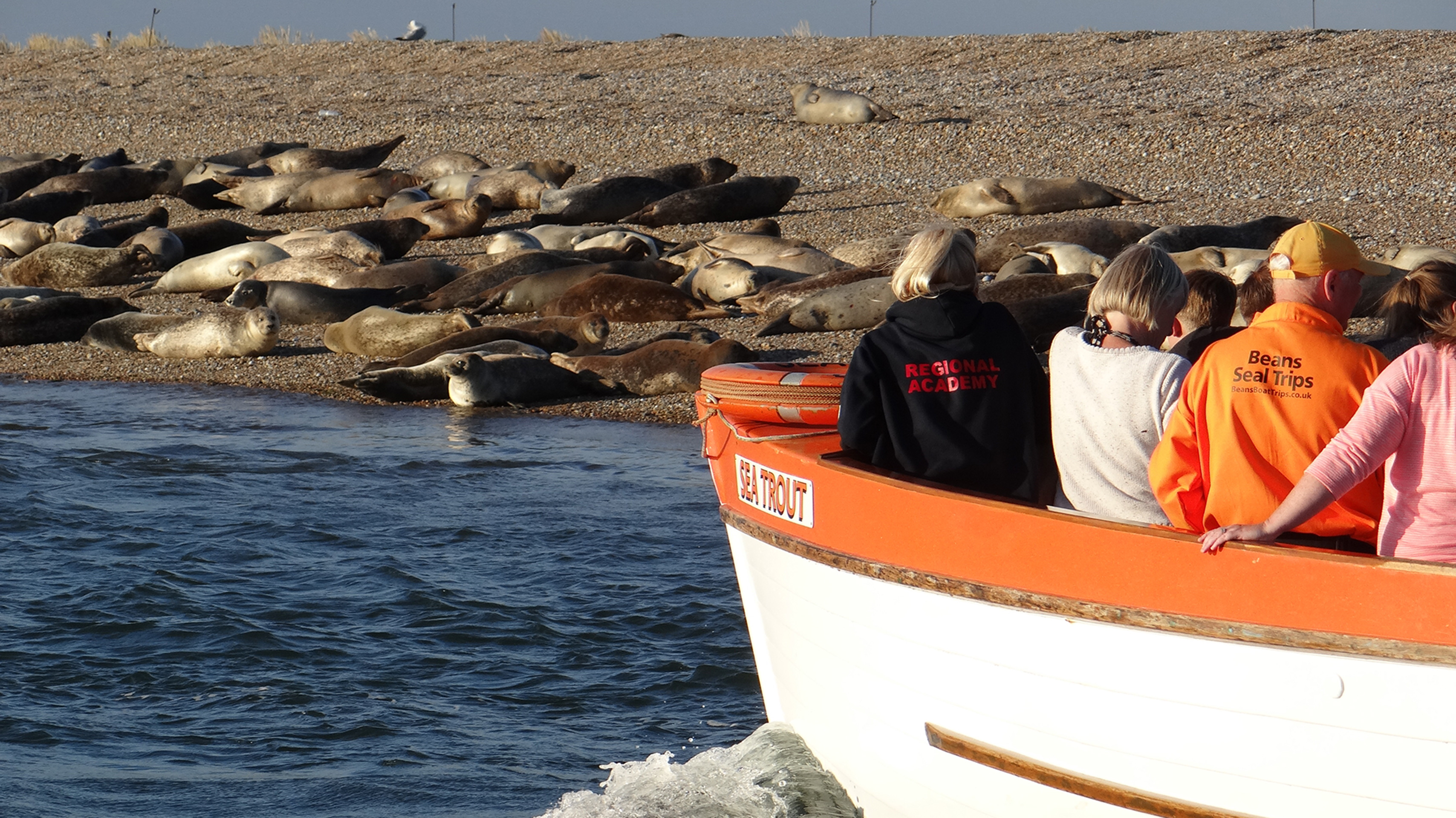 Beans Boats getting close to the seals at Blakeney
